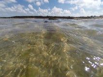 Algue przy kryjówka przypływem Fotografia Stock