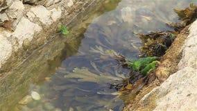Algue sur la côte de Dorset banque de vidéos