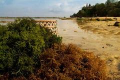 Algue sur la plage Images libres de droits