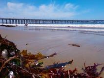 Algue sur le pilier de mouettes et de Ventura de plage image libre de droits