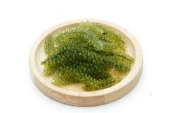 Algue verte de caviar de raisins de mer Image stock