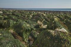 Algue verte - sept soeurs, East Sussex, Angleterre, R-U ; En octobre 2018 images stock