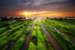 Algue verte sur des roches à Barrika photographie stock