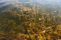 Algues photos libres de droits