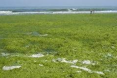 Algues Images libres de droits