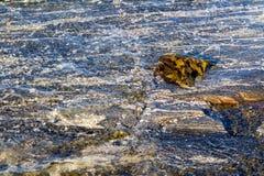 Algues aquatiques d'algue en eau de mer peu profonde République de la Carélie, Russie images libres de droits