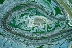 Algues bleu-vert sur un lac au Danemark Images libres de droits