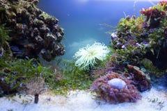 Algues dans l'aquarium Image stock