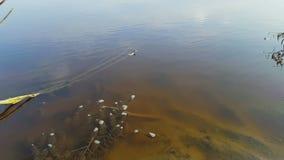Algues de rivière banque de vidéos