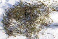 Algues de rivi?re photos stock