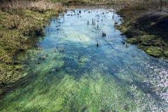 Algues et élodée sous le courant peu profond débordant - 1 Photos libres de droits