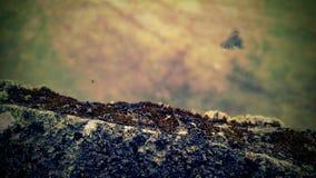 Algues et mousse image libre de droits