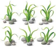 Algues et pierres réglées Photo stock