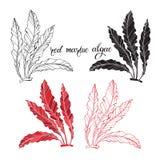 Algues marines rouges Illustration de vecteur sur le fond blanc Éléments d'isolement pour la conception, 4 variantes différentes illustration de vecteur