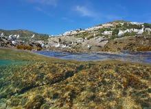 Algues rocheuses de bord de la mer de mouette méditerranéenne sous-marines Images libres de droits