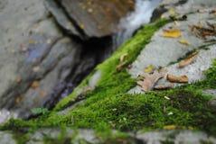 Algues sur des roches : Hausse de cascade Photographie stock