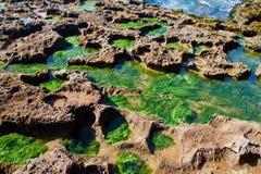 Algues sur le bord de la mer Photographie stock