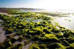 Algues sur le bord de la mer Photo stock
