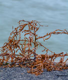 Algues sur le rivage Image stock