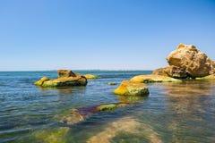 Algues sur les pierres de mer Les algues vertes couvre la surface de mer Photos libres de droits