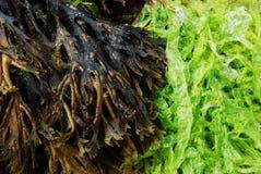 Algues sur une plage photos libres de droits
