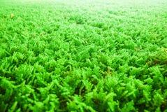 Algues utilisées pour la purification d'eau photographie stock