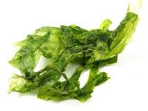 Algues vertes sèches - nutrition saine image stock
