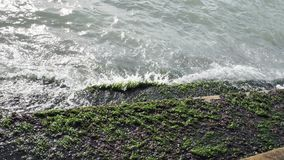 Algues vertes sur escaliers en pierre sur la côte de mer ou d'océan banque de vidéos