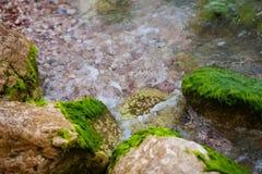 Algues vertes sur l'eau, mer aux roches Photos libres de droits