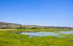 Algues vertes sur la surface du lac Uchali images stock
