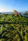 Algues vertes sur une roche au milieu de la mer photo libre de droits