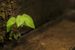 Algum crescimento vegetal duramente fotos de stock royalty free