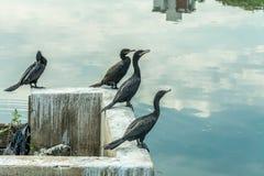 Algum pássaro preto levantou-se na parte dianteira um volume de água que reflete o céu imagem de stock royalty free