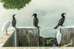 Algum pássaro preto levantou-se na parte dianteira um volume de água que reflete o céu fotografia de stock royalty free