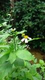 Alguma flor na cidade pequena no MAI do chieng fotografia de stock