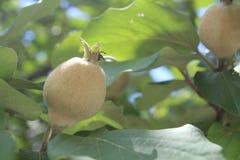 Alguma fruta Imagem de Stock Royalty Free