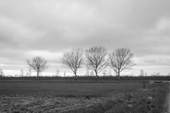 Algumas árvores leafless na borda de um campo Imagem de Stock Royalty Free