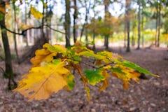Algumas cores bonitas do outono fotografia de stock royalty free