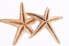 Algumas das estrelas de mar isoladas no fundo branco Foto de Stock