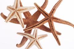 Algumas das estrelas de mar isoladas no fundo branco Imagens de Stock
