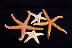 Algumas das estrelas de mar isoladas no fundo preto Fotos de Stock Royalty Free