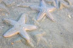 Algumas estrelas do mar na areia molhada Imagens de Stock Royalty Free