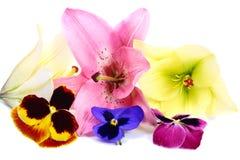 Algumas flores Imagens de Stock