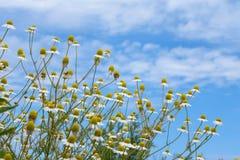 Algumas flores no prado Imagem de Stock