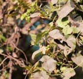 Algumas folhas de uma árvore na vista focalizada Foto de Stock Royalty Free