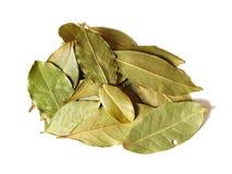 Algumas folhas do louro Fotos de Stock