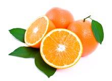 Algumas laranjas e folhas maduras, suculentas do verde. Fotos de Stock