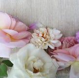 Algumas rosas bonitas Imagens de Stock Royalty Free