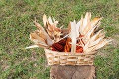 Alguna mazorca de maíz en una cesta, cosechada recientemente Fotos de archivo libres de regalías
