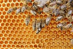 Algunas abejas de trabajo Fotos de archivo